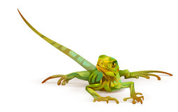 Bright painted lizard on a white background Royalty Free Stock Image