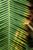 Bright palm leaf close up. Palm branch. Palm leaf. Sun glare Royalty Free Stock Photos