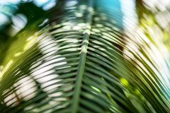 Bright palm leaf close up. Palm branch. Palm leaf. Sun glare Stock Photo
