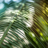 Bright palm leaf close up. Palm branch. Palm leaf. Sun glare Stock Image