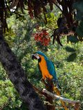 Bright parrot sits on a branch in the tropical forest stock photos
