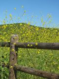 Bright peaceful spring landscape with rustic wooden fence and fresh green field filled with yellow wildflowers Royalty Free Stock Photo