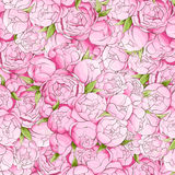 Bright peonies background Stock Photography