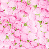 Bright peonies background Royalty Free Stock Photo