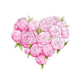 Bright peonies heart Royalty Free Stock Images
