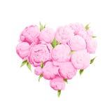 Bright peonies heart Stock Image