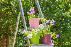 Bright petunias in multi-colored flower pots on the stepladder, Royalty Free Stock Photos