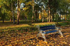 Bright picture, landscape design ideas. Autumn photo, Yellow leaves, september or october, landscape photography, beautiful garden, park, green grass, light and Stock Images