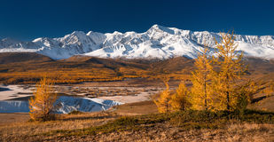 Free Bright Picturesque Autumn Landscape With Mountains Covered With Snow, Forest, Yellow Larches And Beautiful Lake With Reflections Royalty Free Stock Image - 92755776