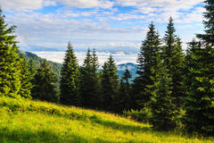 Bright, picturesque Carpathian mountains landscape in morning, Ukraine, Europe. Stock Photography