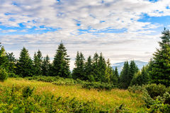 Bright, picturesque Carpathian mountains landscape in morning, Ukraine, Europe. Royalty Free Stock Photo