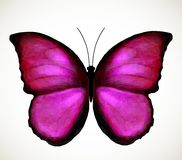 Bright Pink Butterfly. Vector