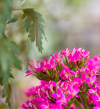 Bright pink color flowers Stock Photos