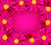 Bright pink flower frame Royalty Free Stock Image