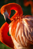 Bright pink flamingo on the green background Royalty Free Stock Photos