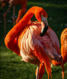 Bright pink flamingo on the green background Stock Photo