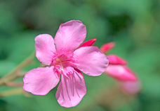Bright pink flower Stock Photos