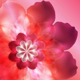 Bright pink flower Royalty Free Stock Images