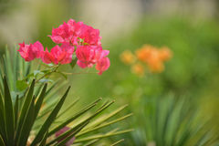 Bright pink flower among green plants Royalty Free Stock Photos