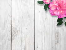 Bright Pink Flower. Over whitewashed wood Stock Photos