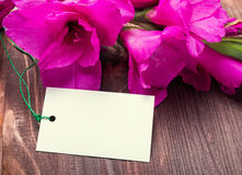 Bright pink flowers and empty card on the wooden table Royalty Free Stock Image
