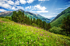 Free Bright Pink Flowers On A Mountains Field Royalty Free Stock Images - 57306129