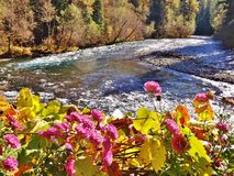 BRIGHT PINK FLOWERS WITH THE RIVER IN THE BACKGROUND Royalty Free Stock Photography
