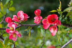 Bright and pink flowers spring tree Stock Photo