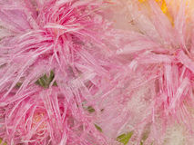 Bright pink ice organic abstraction Royalty Free Stock Photos