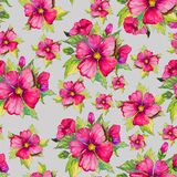 Bright pink malva flowers with green buds and leaves on light grey background. Seamless floral pattern.  Watercolor painting. Hand drawn illustration. Can be Stock Images