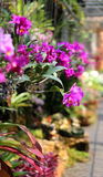 Bright pink orchids Stock Images
