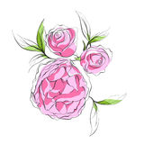 Bright pink peonies Stock Images