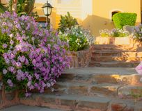 Bright pink petunias overflowing on to the stone pathway and steps. stock photo