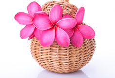 Bright pink plumeria in a rattan basket Royalty Free Stock Photography