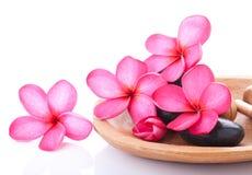 Bright pink plumeria Stock Photography