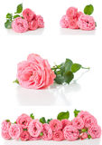 Bright pink roses, collage, isolated royalty free stock photos