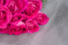 Bright Pink Roses on Gray Tulle Background Royalty Free Stock Image