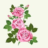 Bright pink roses on pale green background. Bright pink vector roses bouquet on the pale green background for floral decoration Royalty Free Stock Photos