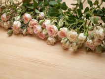 Bright pink spray roses on wooden background Stock Photos