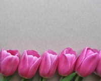 Bright pink tulip flower border on textured background with text and copy space. Bright pink tulip flower border on background with copy space stock photo