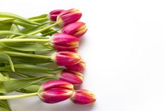 Pink Tulips on White Royalty Free Stock Photography