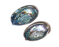 Bright polished rainbow abalone shell Royalty Free Stock Photography