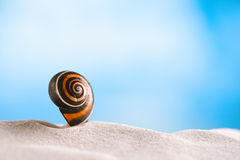 Bright polymita shell on white beach sand under the sun light. Shallow dof Royalty Free Stock Photo