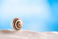 Bright polymita shell on white beach sand under the sun light. Shallow dof Stock Images