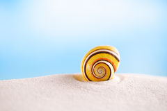 Bright polymita shell on white beach sand under the sun light Stock Photos