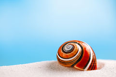 Bright polymita shell on white beach sand under the sun light Stock Photography