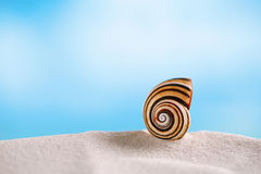 Bright polymita shell on white beach sand under the sun light. Shallow dof Royalty Free Stock Images