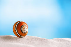 Bright polymita shell on white beach sand under the sun light. Shallow dof Stock Image