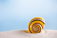 bright polymita shell on white beach sand under the sun light Royalty Free Stock Image