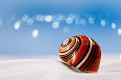 Bright polymita shell on white beach sand Stock Photography